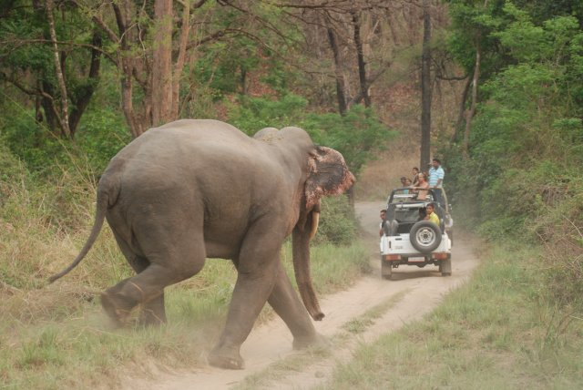 Jim Corbett National Park- Asian Elephant